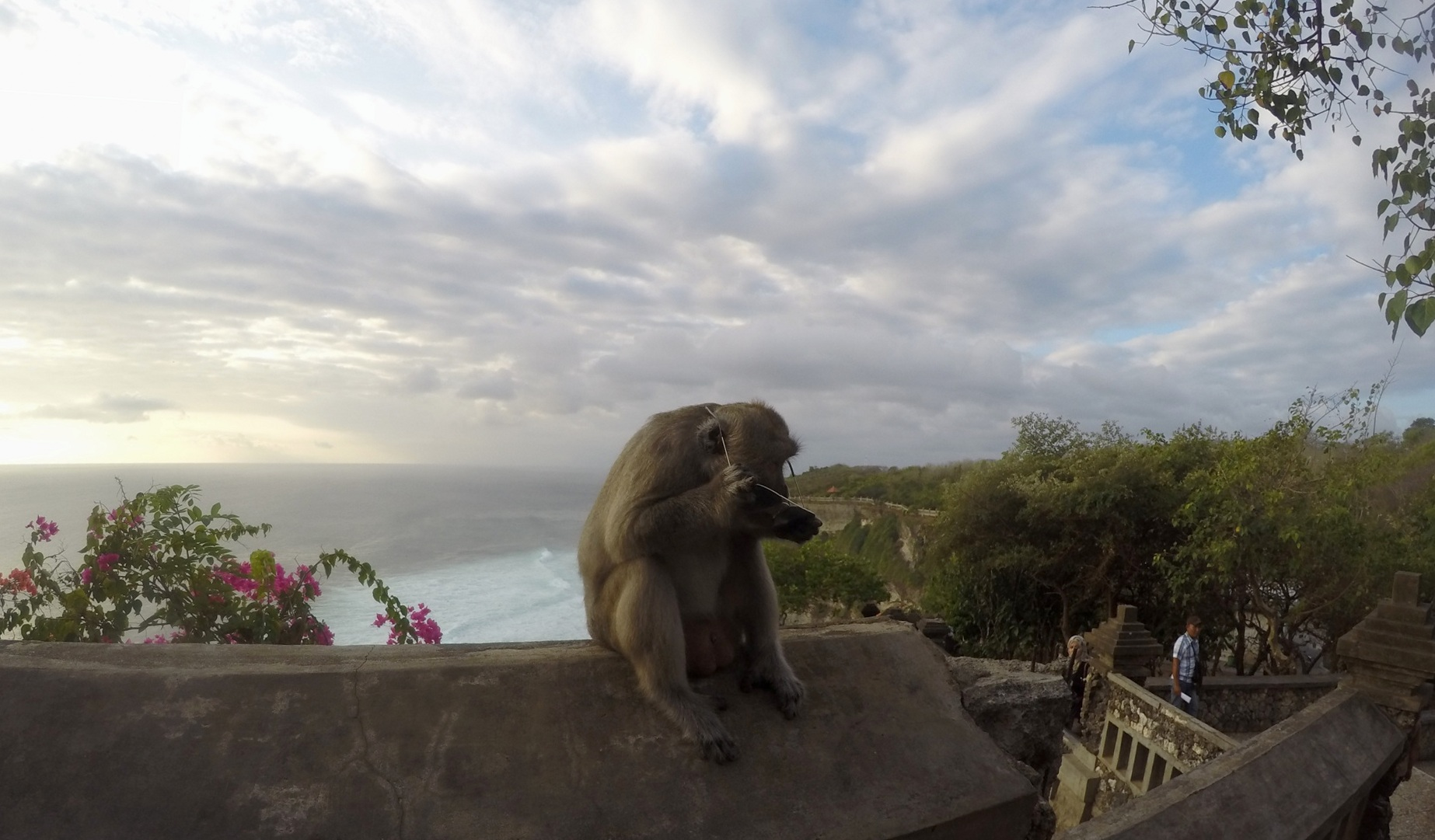 Uluwatu - macaco ladro!