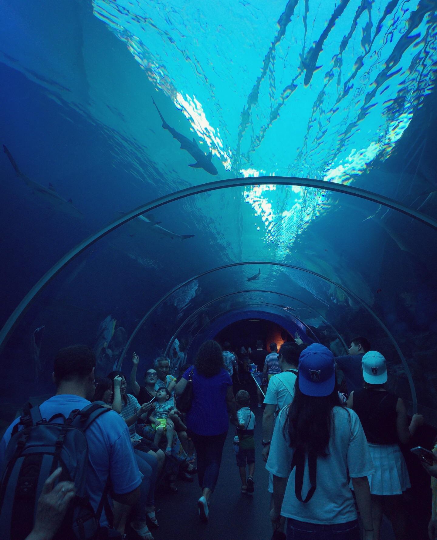 acquario di Singapore - galleria degli squali