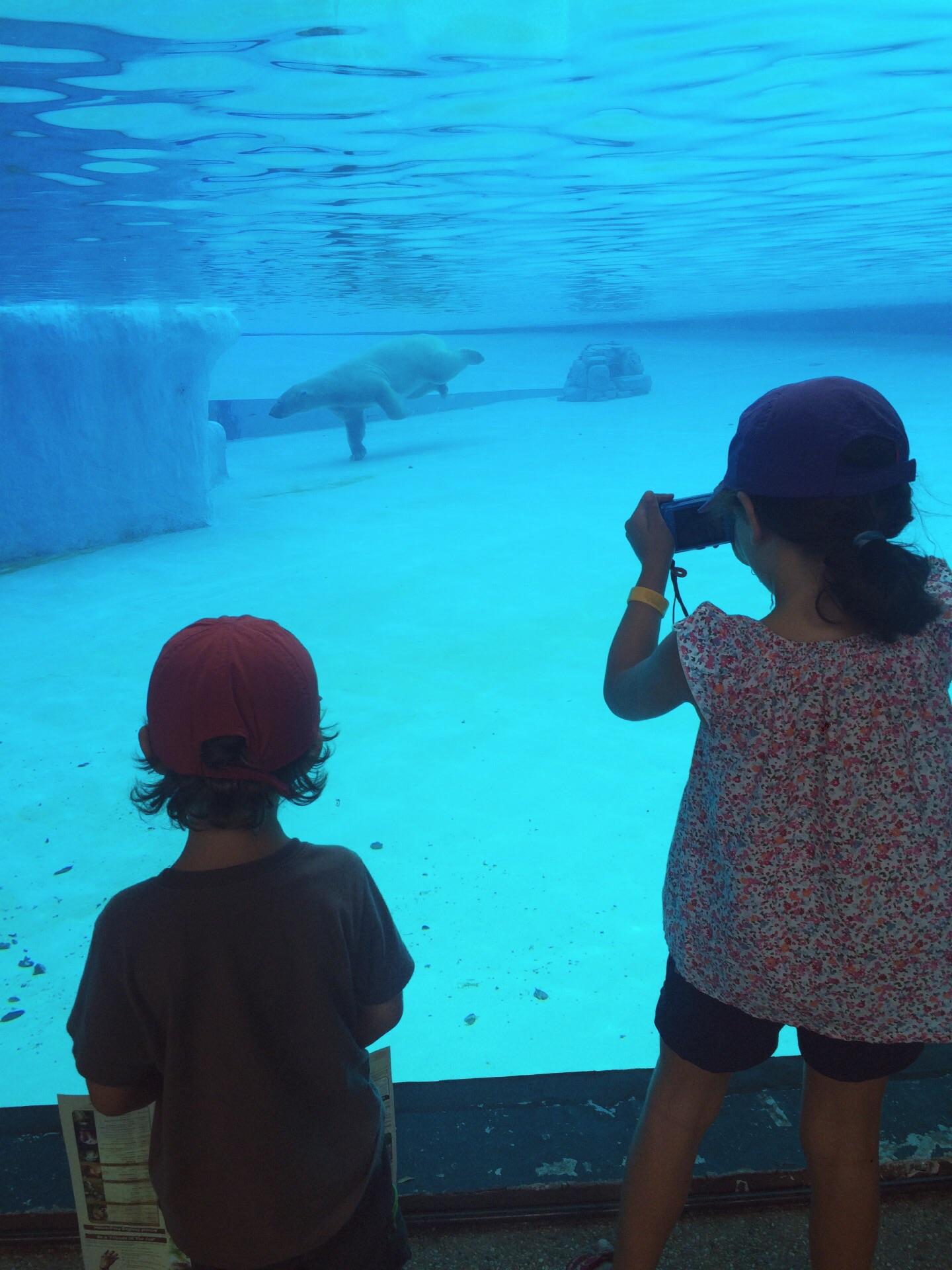 Orso polare allo zoo